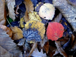 Abruzzo foglie
